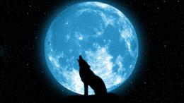 wolf howling on the moon Wallpapers HD 1932