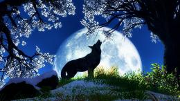 download wolf moon wallpaper tags blossom wolf tree howling moon night 873