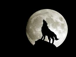Wolf Moon Exclusive HD Wallpapers #2670 340