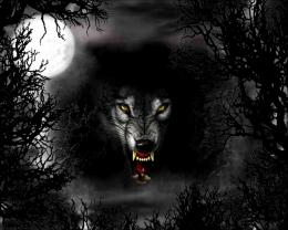 Wolf Moon Wallpaper 11271 Hd Wallpapers in AnimalsImagesci com 1744