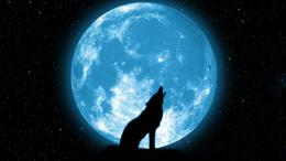 Wallpaper night, sky, Moon, wolf, stars, Wolf howling at the moon 913