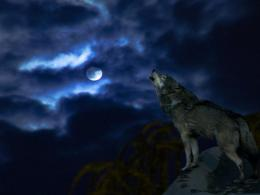 Wolf Moon Wallpaper 11249 Hd Wallpapers in AnimalsImagesci 1880