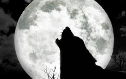 Wolf Moon Wallpaper 10863 Hd Wallpapers in AnimalsImagesci com 1396