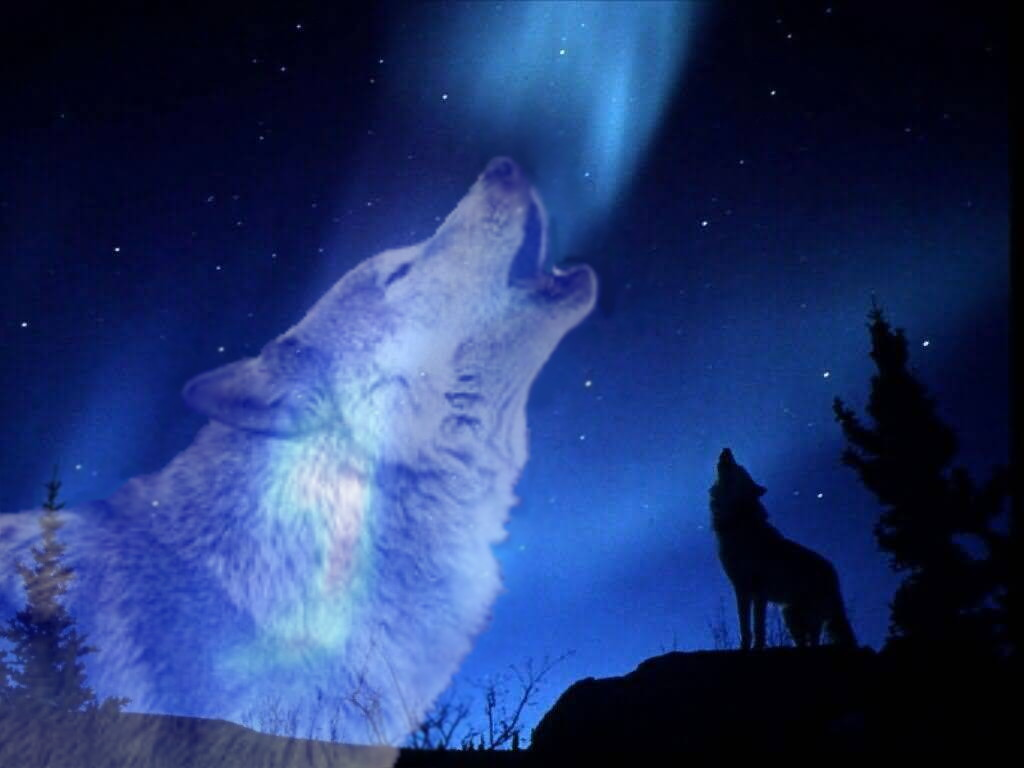 36 Howling Wolf Moon Wallpaper Wolf Howling At The Moon 1327 Moon And Wolf Wallpaper