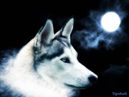 Wolf Moon Wallpaper 10843 Hd Wallpapers in AnimalsImagesci com 417