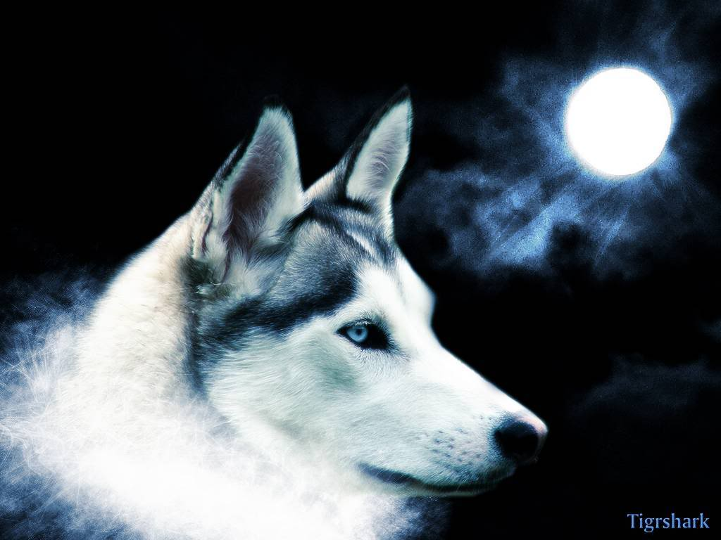 38 Wolf Moon Wallpaper 10843 Hd Wallpapers In Animalsimagesci Com 417 Moon And Wolf Wallpaper