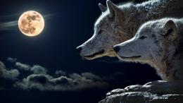 Wolves and Full Moon WallpaperPublic Domain 707