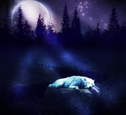 Wolf Moon Wallpaper 11289 Hd Wallpapers in AnimalsImagesci com 1505