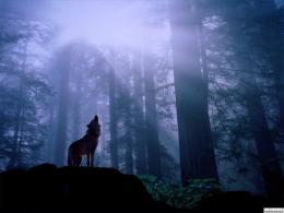 Wolf Howling At Moon Wallpaper | Wallpaper ME 1961