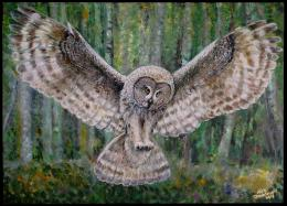 Pin Owl In Flight Wallpapers Hd on Pinterest 919