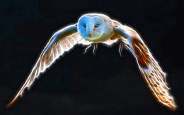 download flight of snowy owl wallpaper tags wing fractalius flight 690