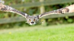 Owls Flight HD 1080p Wallpapers Download | HD Wallpapers Source 294