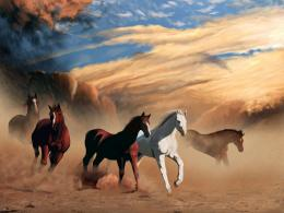 Horses Wallpapers | Horse Desktop Backgrounds 279