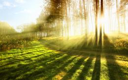 Bright Sunlight Rays Wide Desktop Background 794