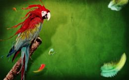 Splash of Parrot Wallpapers | HD Wallpapers 1491