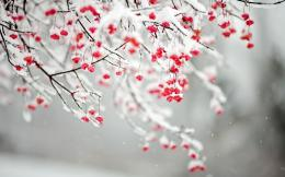 Winter FlowersWallpaper, High Definition, High Quality, Widescreen 1071