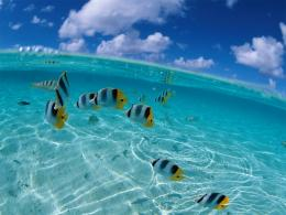 Free School of Tropical Fish Wallpapers , Free School of Tropical 1785