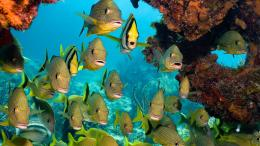 School Of Fish Hd Wallpaper | Wallpaper List 1080