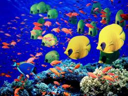 Tropical School Of Fish 2: Underwater WallpaperBackground Bandit 1527