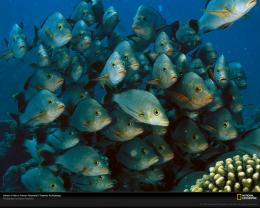, School of Fish, Photo of the Day, Picture, Photography, Wallpapers 797