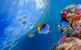 Tropical fish school wallpaper | Wallpaper Wide HD 863