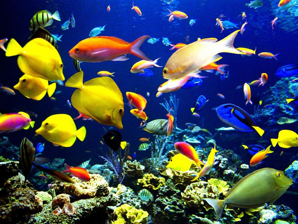 6 Very Colorful A School Of Fish Beautiful 1100 School