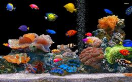 Tropical Fish School Desktop Animal 1920 X 1080 Oscar Fish Desktop 1136
