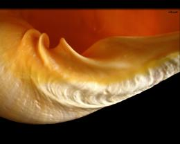 Shell Detail Close Up World Wallpaper Collection 1800