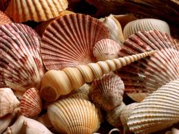 Are Watching The Sea Shell WallpapersBeautiful Sea Shells Wallpapers 1113