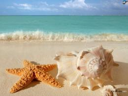 WallpapersNatureSeashells 1502