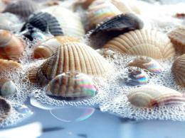 Sea Shells Wallpaper 1400x1050 Sea, Shells, Seashells, Close, Up 1649