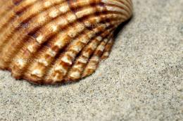 Sea Shell close up — Stock Photo © vladem #1853584 1131