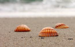 , shell, shells, sand, sea, water, close up, background, wallpaper 1813