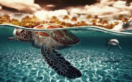 Sea turtle and shark wallpaperAnimal wallpapers#14650 1240