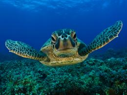 Turtle Wallpapers, Download Cute underwater Turtles HD Wallpapers Free 670
