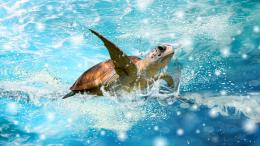 AnimalSea Turtle Wallpaper 1350
