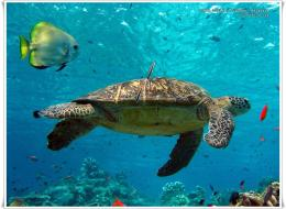 Sea Turtle WallpaperAnimals Wallpapers 1644