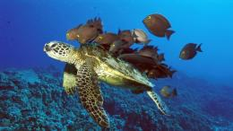 Sea Turtle wallpaperTurtles Wallpaper10957583Fanpop 1634
