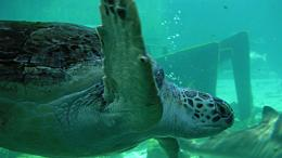 Sea Turtle Wallpaper 1541