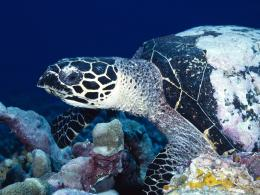Sea Turtle Wallpaper 1821