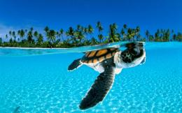 Cute Turtle Sea Desktop Wallpaper | PicsWallpaper com 151