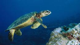 sea turtle wallpaper 4 sea turtle wallpaper 5 sea turtle 911