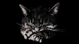 Download Sleeping cat wallpaper in Animals wallpapers with all 1393