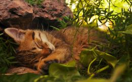 Cat sleeping under a rockHD Wallpaper, get it now! 393