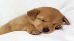 dog wallpaper sleeping wallpapers 1920x1080 1588