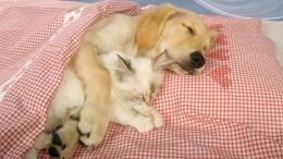 download dog hugs cat sleeping wallpaper in animals wallpapers with 933