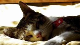 download sleeping cat wallpaper in animals wallpapers with all 1459
