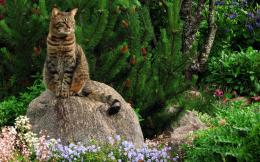 Attentive cat on the rock Wallpaper #26780 1828
