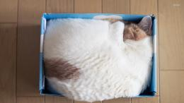 Cat sleeping in a box wallpaper 1280x800 Cat sleeping in a box 1185