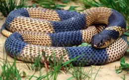 close up wallpaper 5 high definition close up wallpaper snakes photo 301